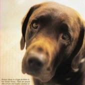 Humane Society Ads